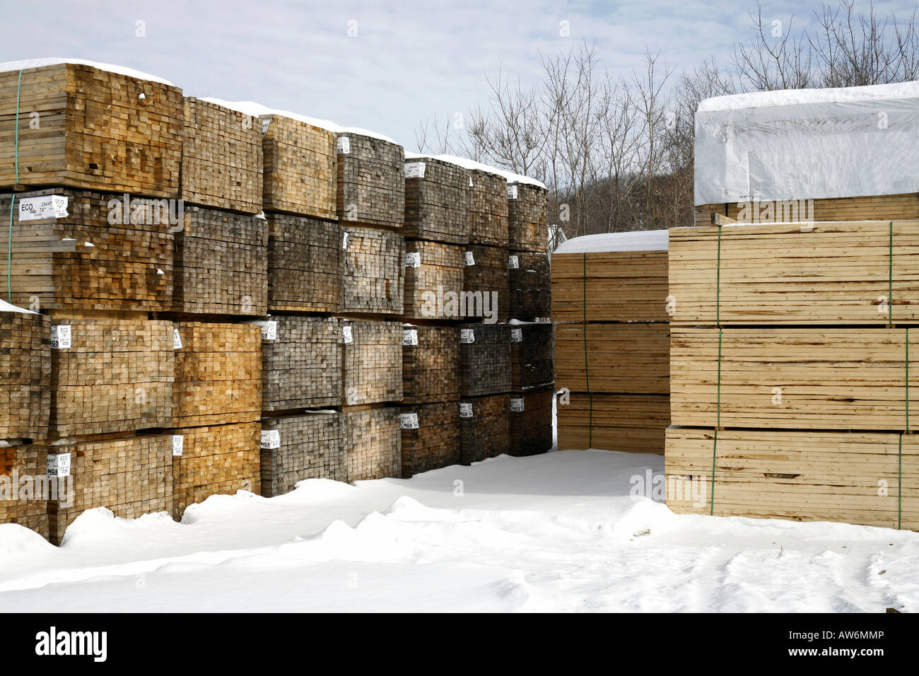 Piles of softwood lumber in winter - Stock Image