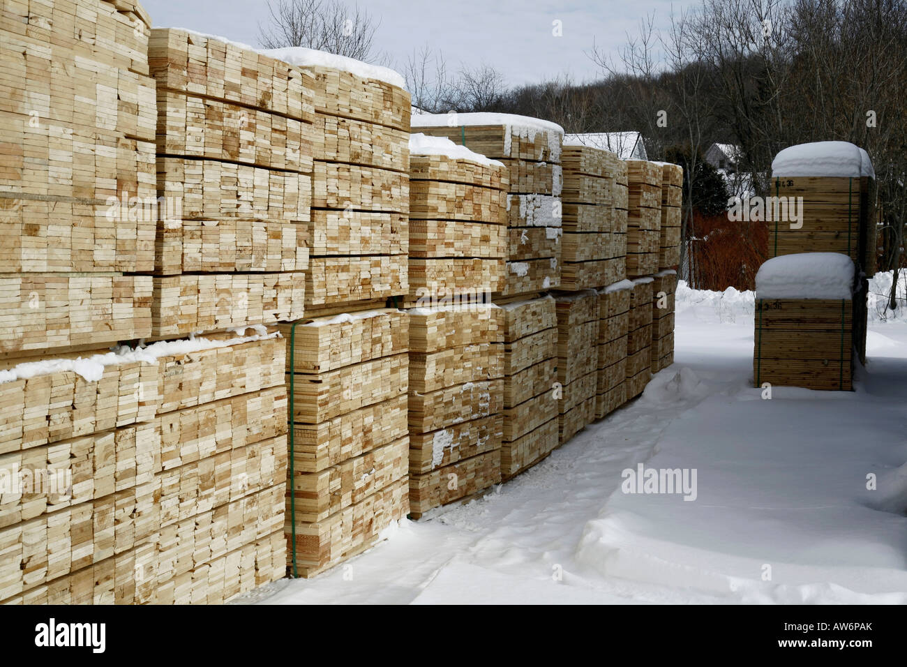 Softwood lumber in piles at winter - Stock Image