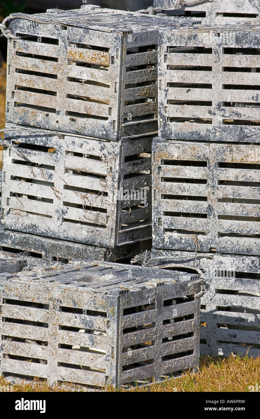 crab traps marine fisheries stacked - Stock Image