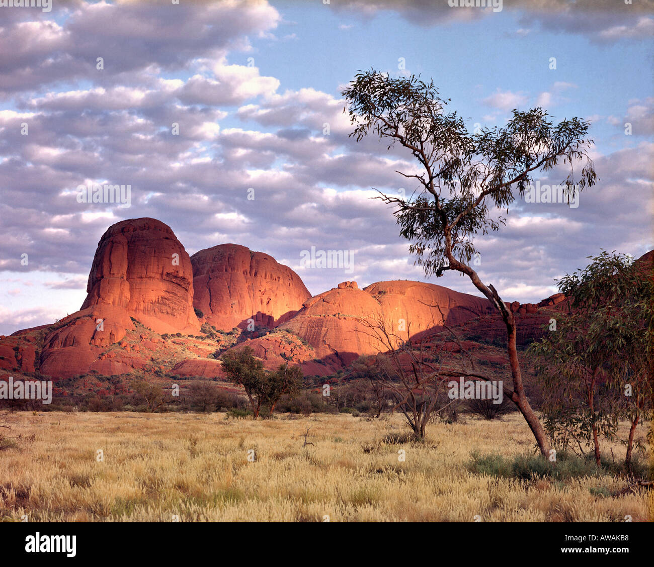 AU - Northern Territory:  The Olgas - Stock Image