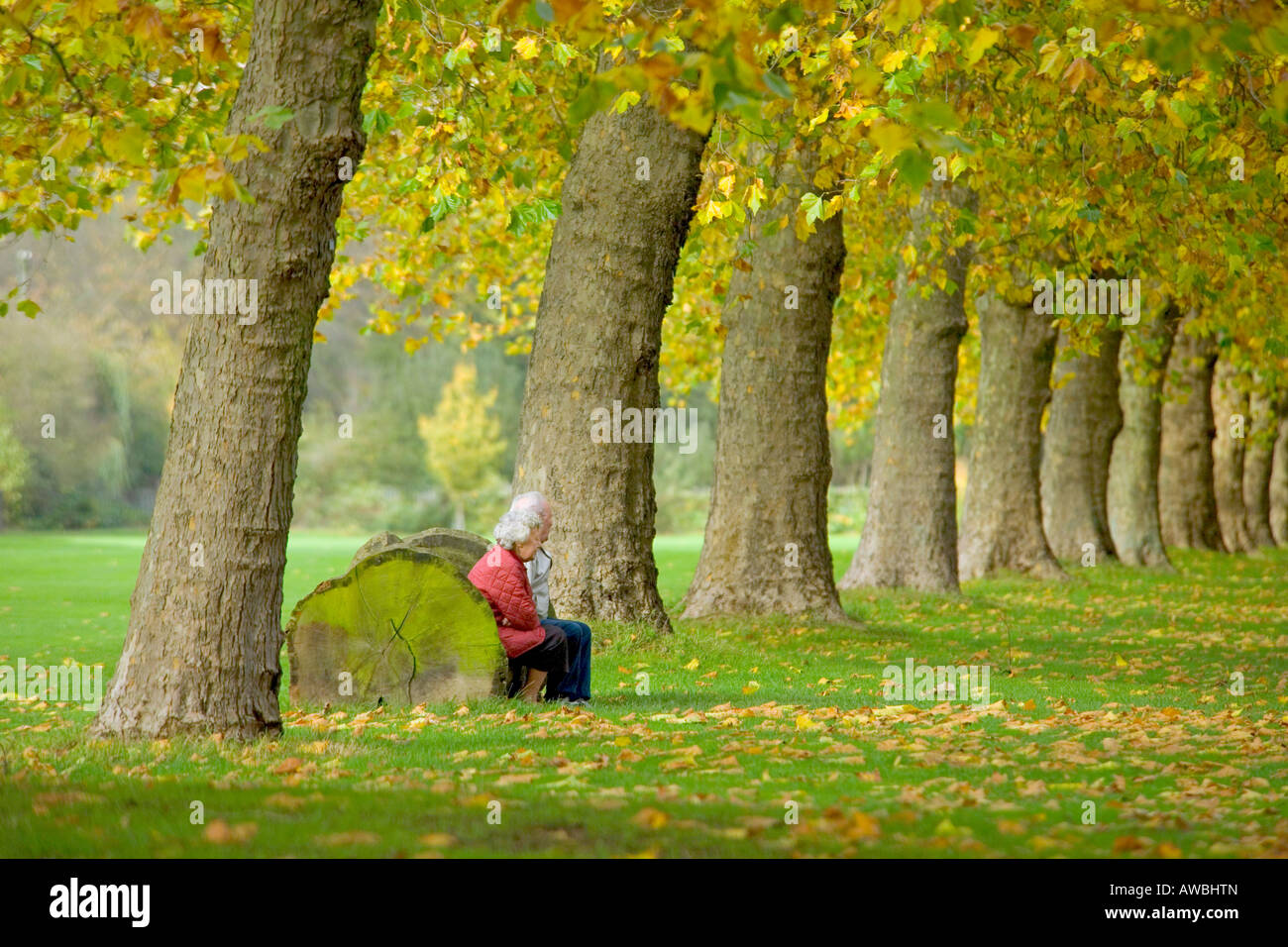 Elderly retired couple sitting on a log bench in a row of autumnal trees. - Stock Image