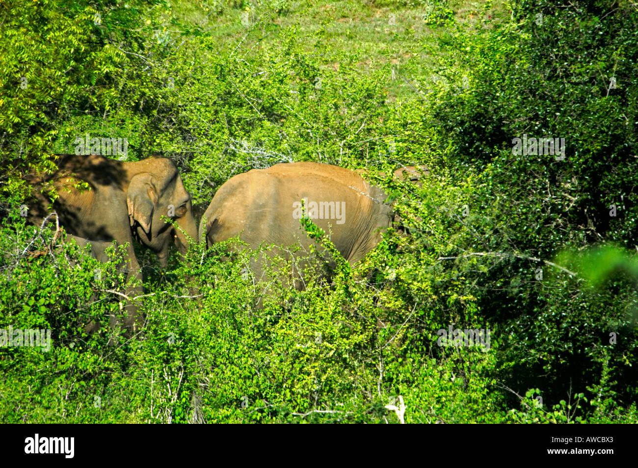 Chinnar Wildlife Sanctuary Stock Photos & Chinnar Wildlife
