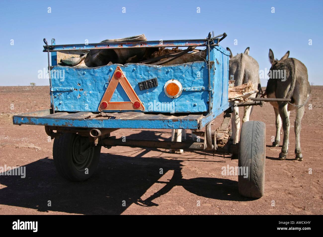 Donkeys with Donkey cart, South of Namibia, Africa Stock Photo