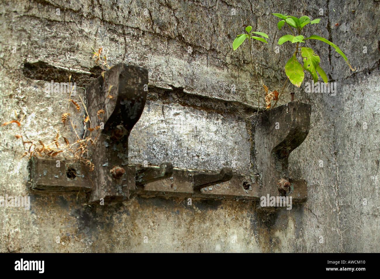 green plant growing on broken wall bracket at Purandar Fort , Vajragadh , Pune , Bombay Mumbai , Maharashtra , India - Stock Image