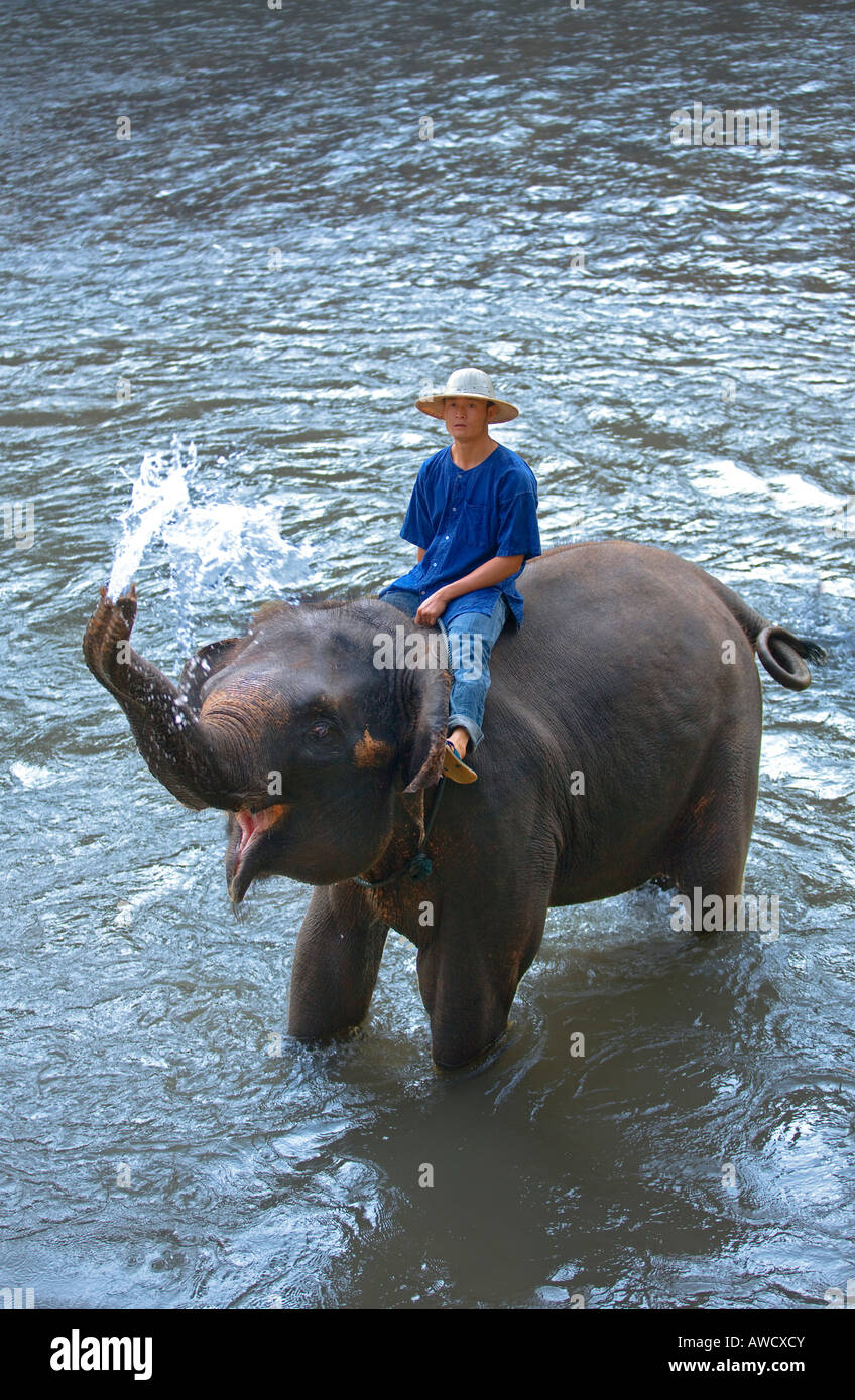 elephant camp near Chiang Dao Thailand Stock Photo