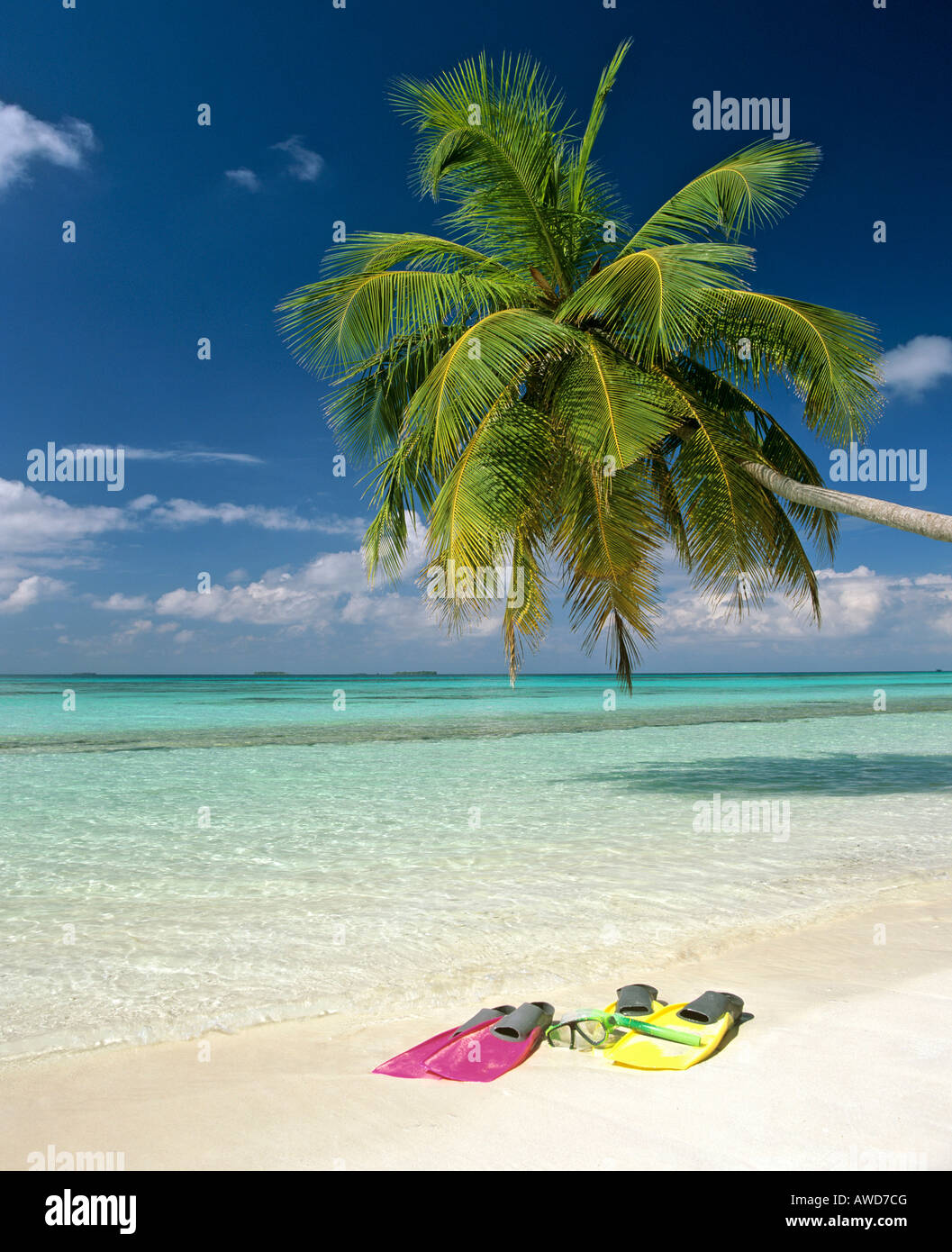 Palm tree, snorkeling gear, turquoise waters and beach, Maldives, Indian Ocean - Stock Image