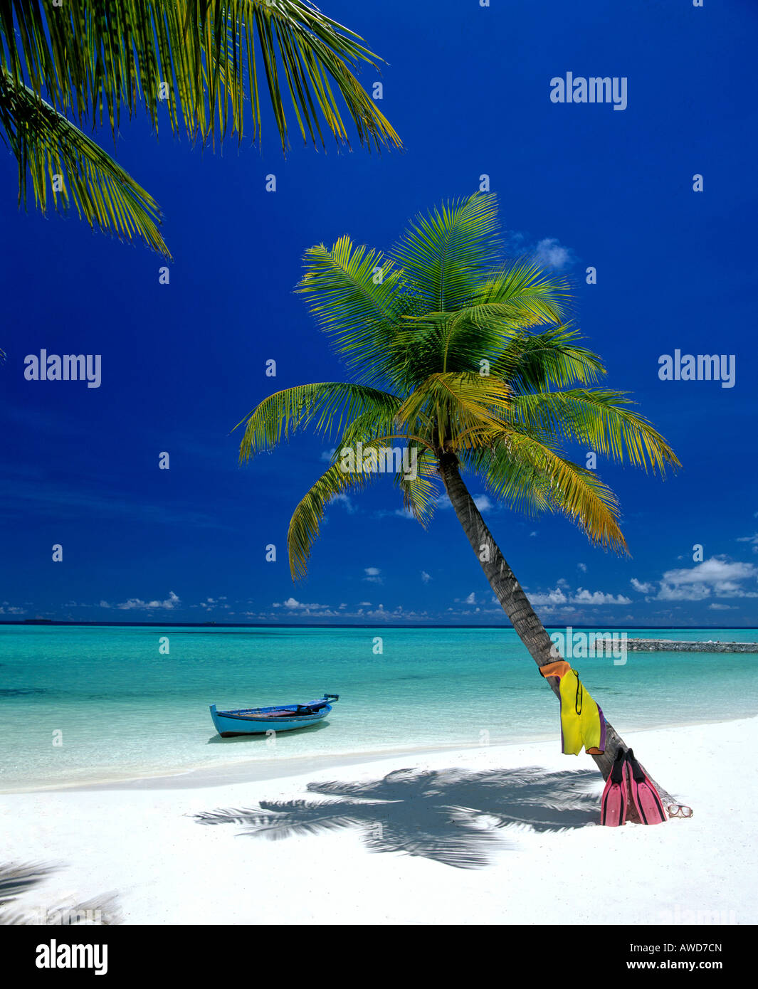 Palm tree, beach, snorkeling gear and boat, Maldives, Indian Ocean - Stock Image