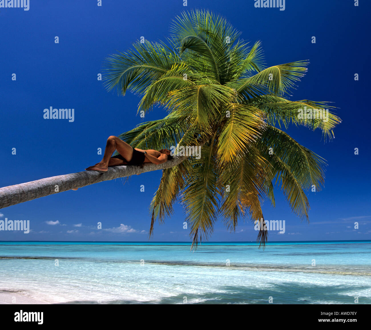 Young man resting in a palm tree on the beach, Maldives, Indian Ocean - Stock Image