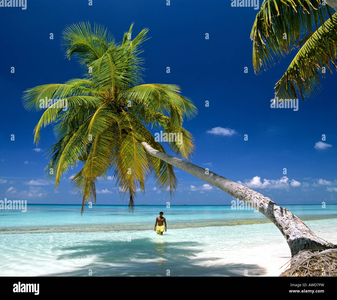 Palm Tree Beach: Palm Tree On Beach Hanging Over Water, Young Man Wading In