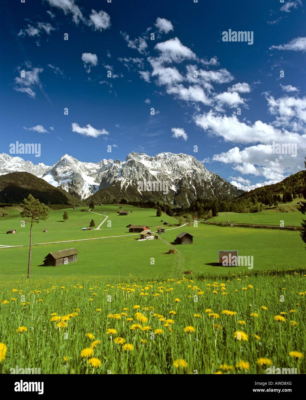 Tonihof Wildlife Park, Flower meadow in spring, Wetterstein Range, Mittenwald Forest, Upper Bavaria, Bavaria, Germany, Stock Photo