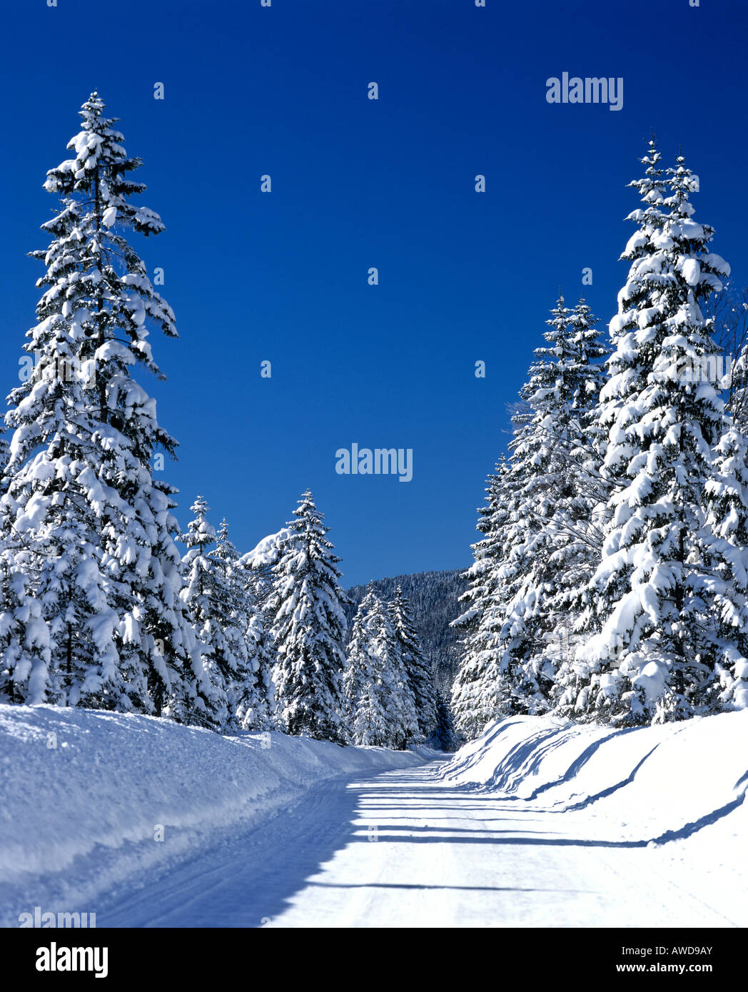 Snowy country road in winter Stock Photo