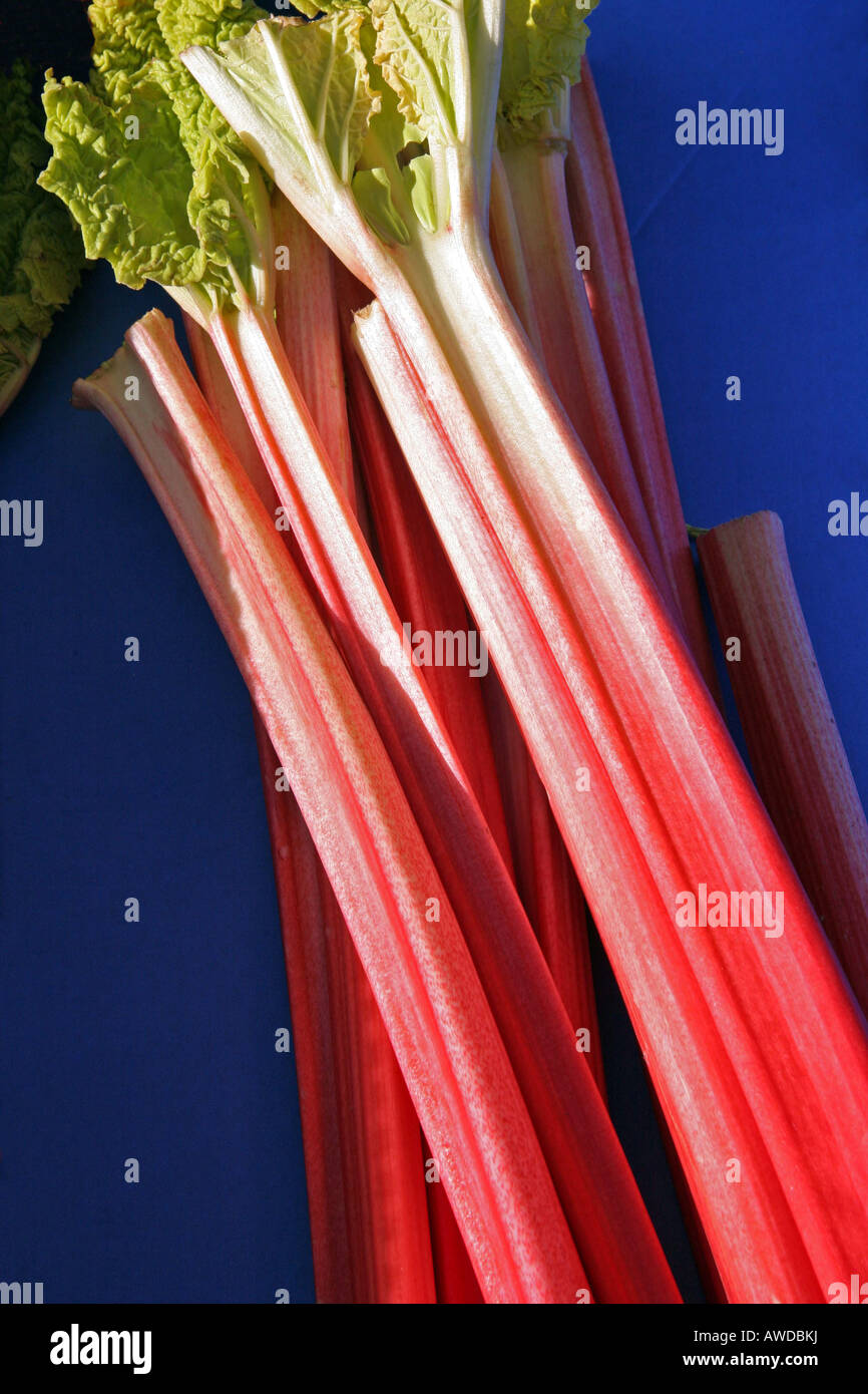 Sticks of Rhubarb on a blue background - Stock Image