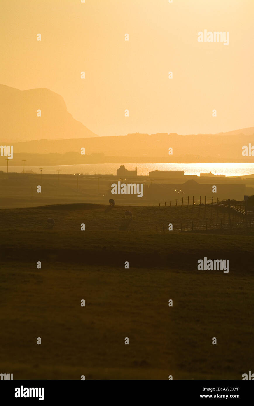 dh Loch of Harray HARRAY ORKNEY Sheep in field orange dusk sunset Stock Photo