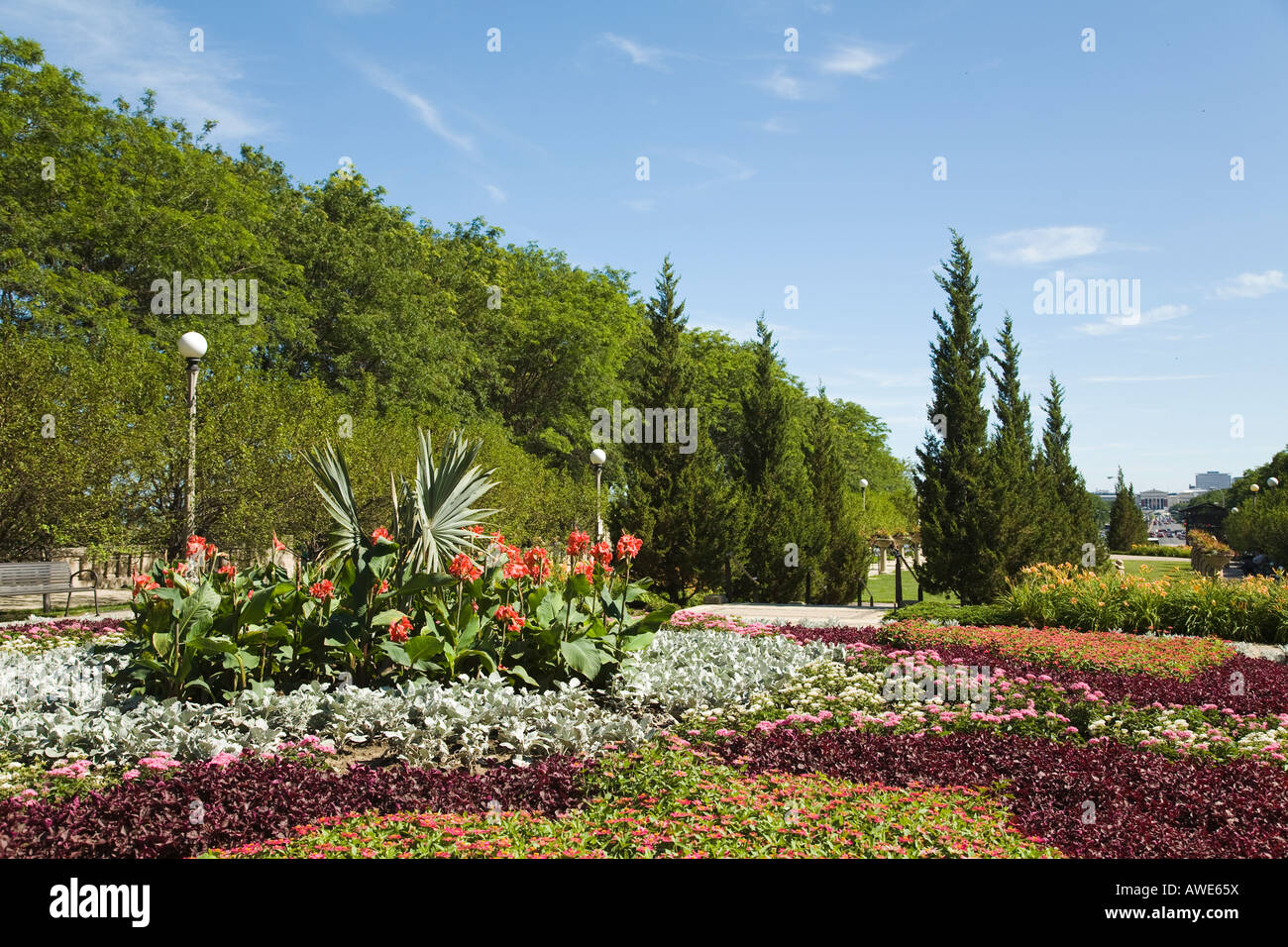 ILLINOIS Chicago Flowers blooming in Cancer Survivors Garden in Grant Park - Stock Image