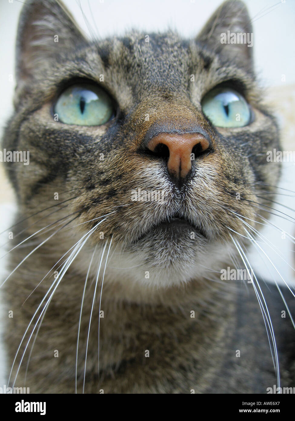 Portrait of a handsome cat - Stock Image
