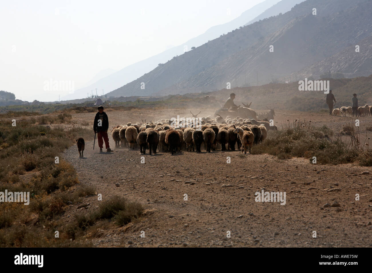 Quashqai nomads hereding sheep and goats in southern iran - Stock Image