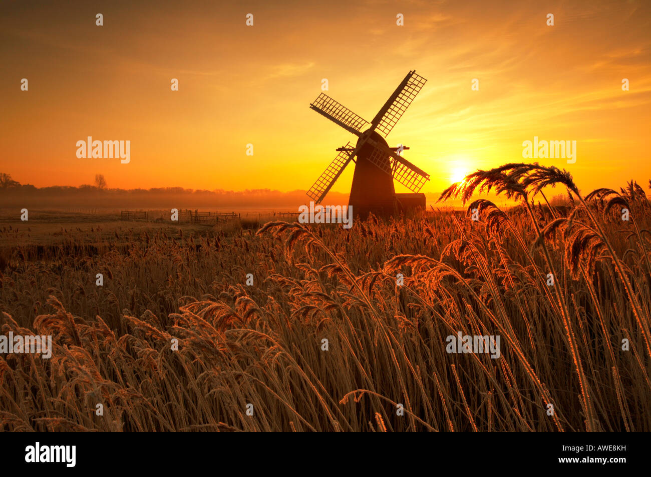 Hoar Frost reeds covered in ice cystals at sunrise with Herringfleet windmill in the background on the Norfolk & - Stock Image