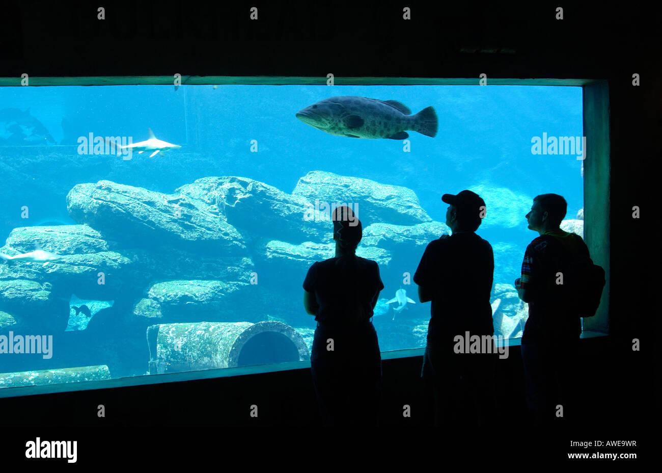 Visitors at the shipwrecked-themed Sea World Aquarium, uShaka Marine World, Durban, South Africa - Stock Image