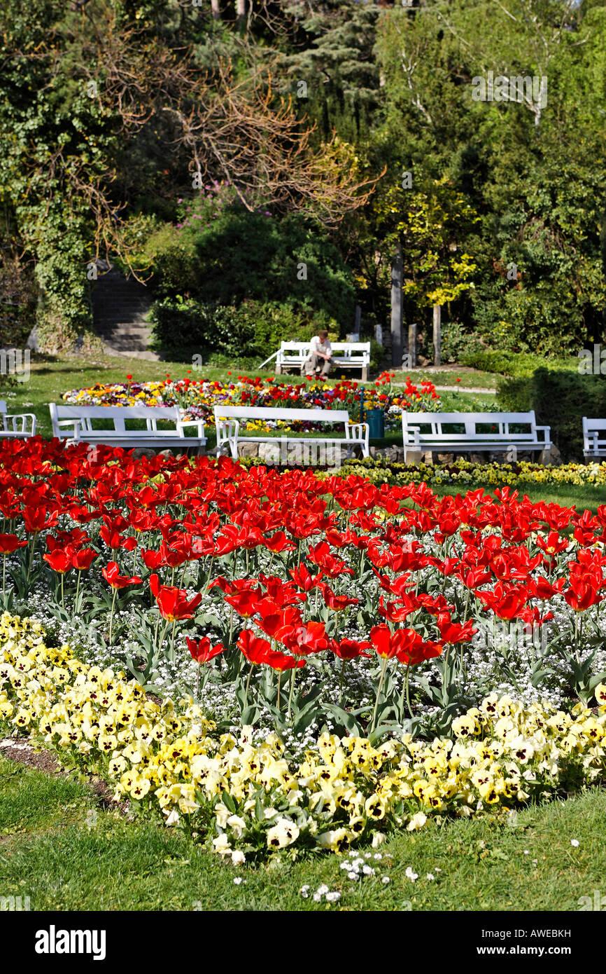 Tulip flowerbed in the spa park in Baden, Lower Austria, Austria, Europe Stock Photo