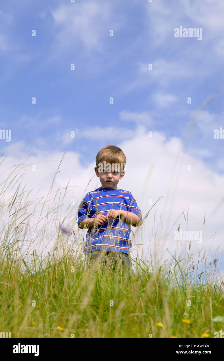 A young boy in a meadow on a beautiful summers day - Stock Image
