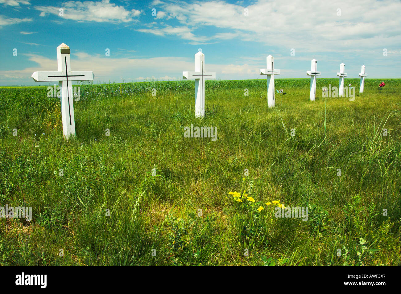 A row of white crosses to commemorate abortion victims near Smuts Saskatchewan Canada - Stock Image