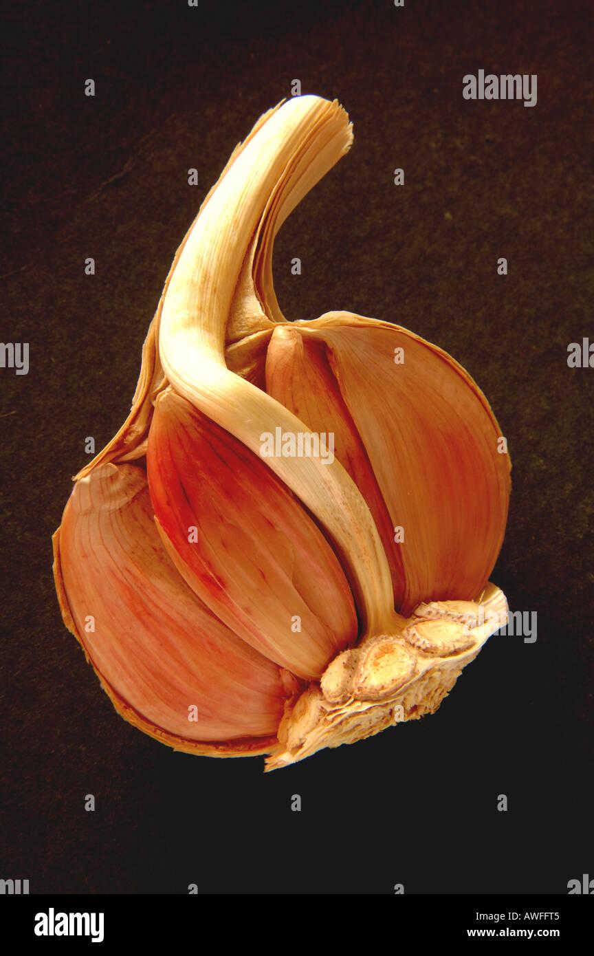 Garlic bulb - Stock Image