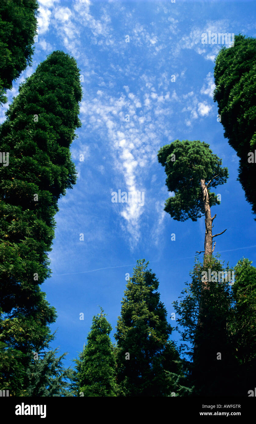 Mixed stand of introduced conifer species, North Rhine-Westphalia, Germany, Europe - Stock Image