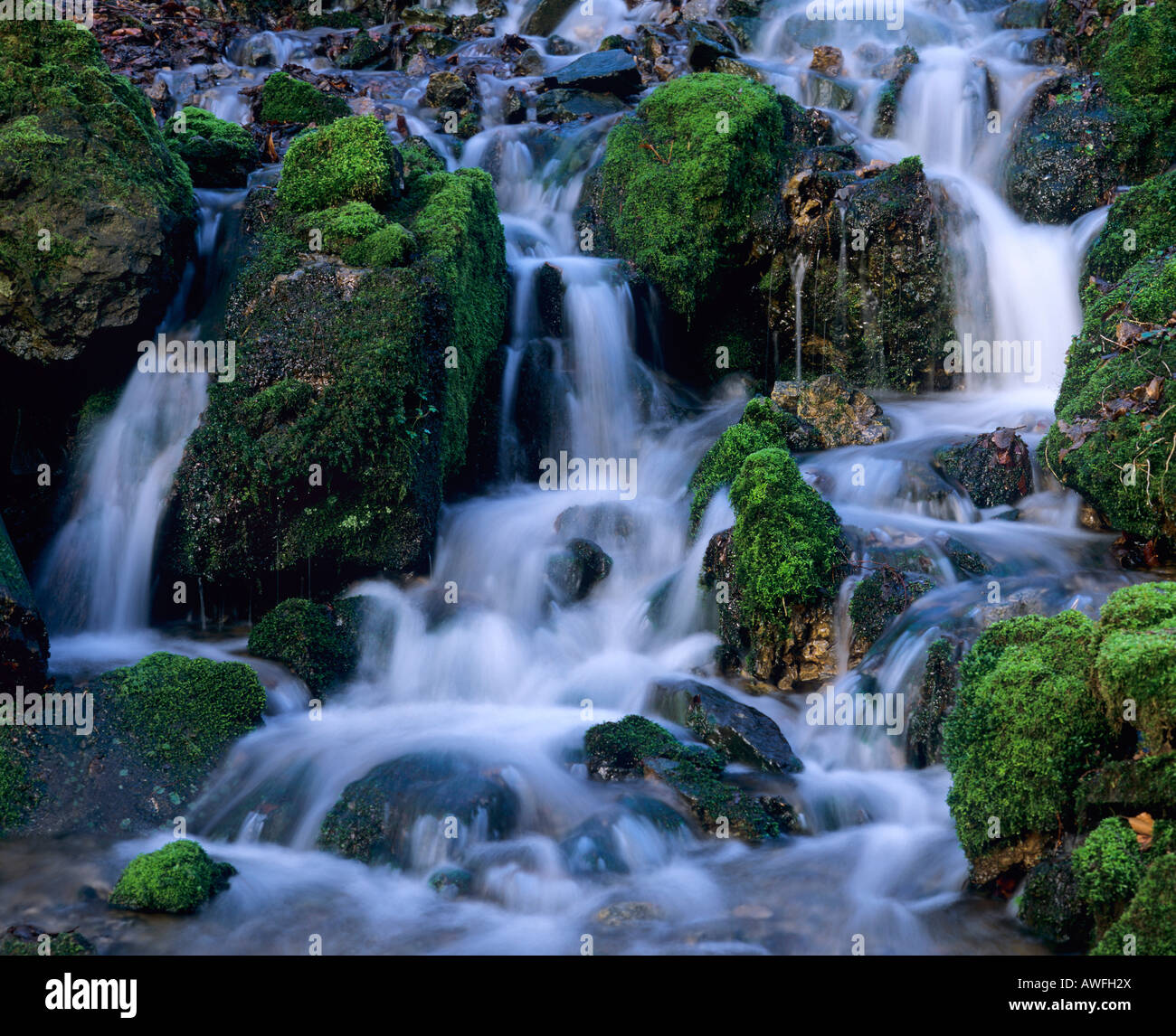 Moss-covered rocks in a forest stream, North Rhine-Westphalia, Germany, Europe Stock Photo