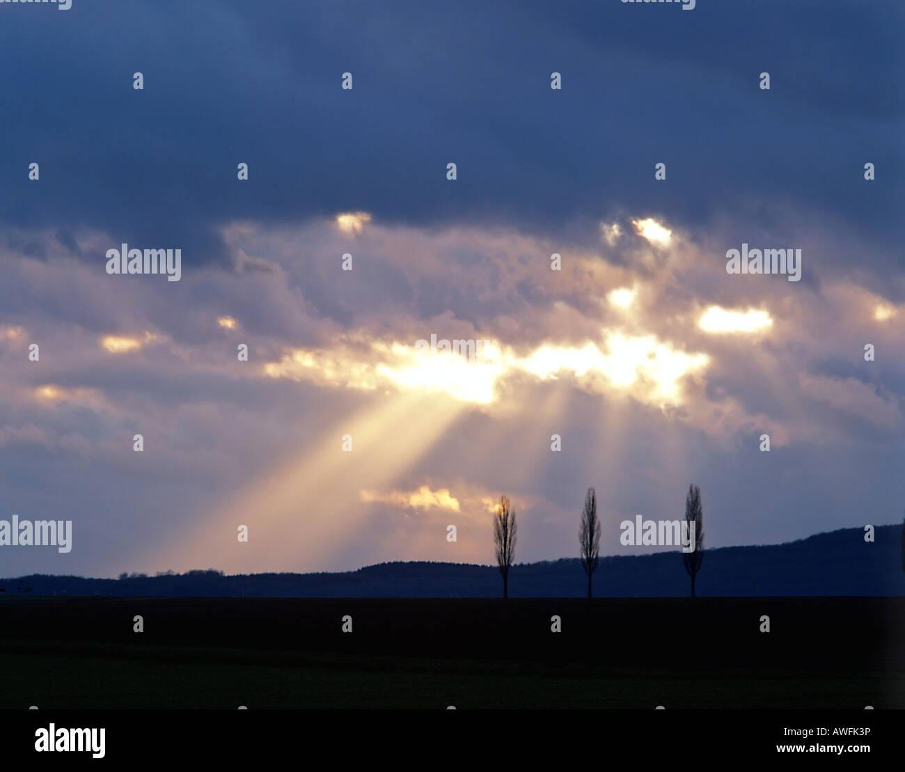 Rays of sunlight shining through clouds and three poplars Stock Photo