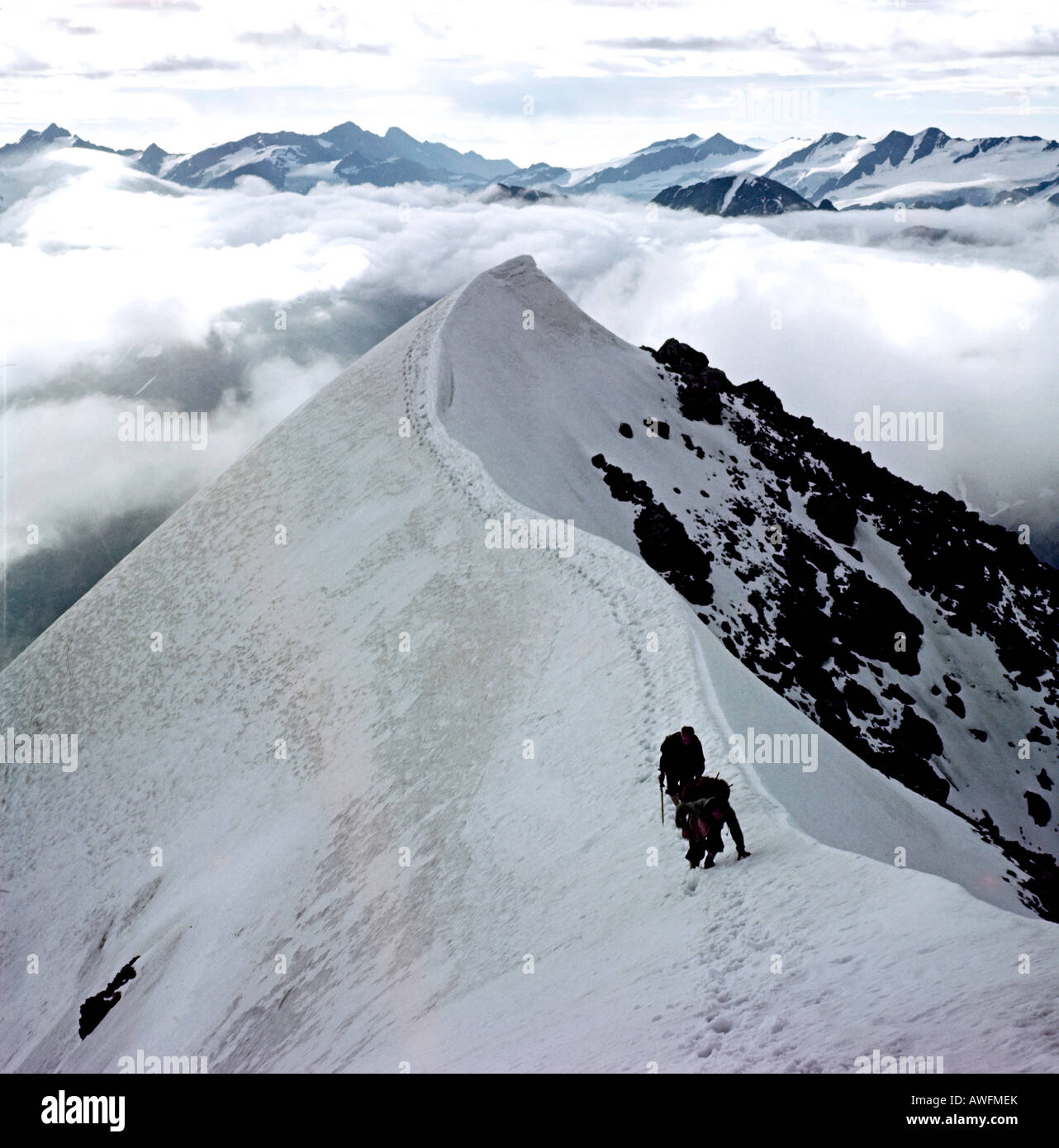 Mountain climber at Ortler Hintergrat, Ortlergruppe, South Tirol, border to Lombardy, Italy, Europe - Stock Image