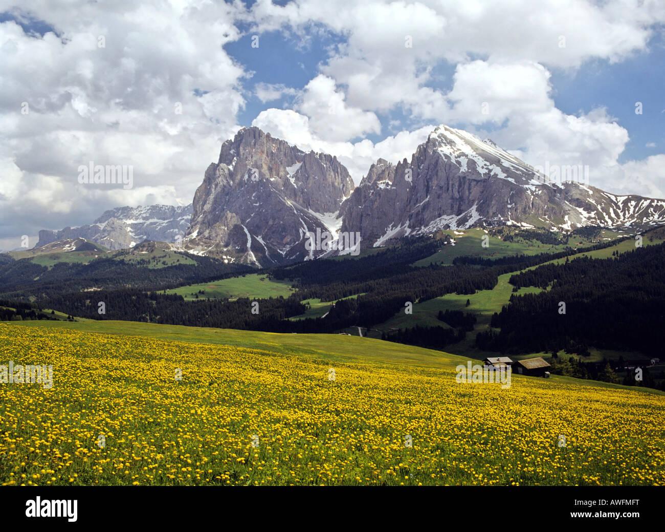 Seiser Alm alpine pasture with view of Langkofelgruppe Range, Dolomites, South Tirol, Italy, Europe - Stock Image