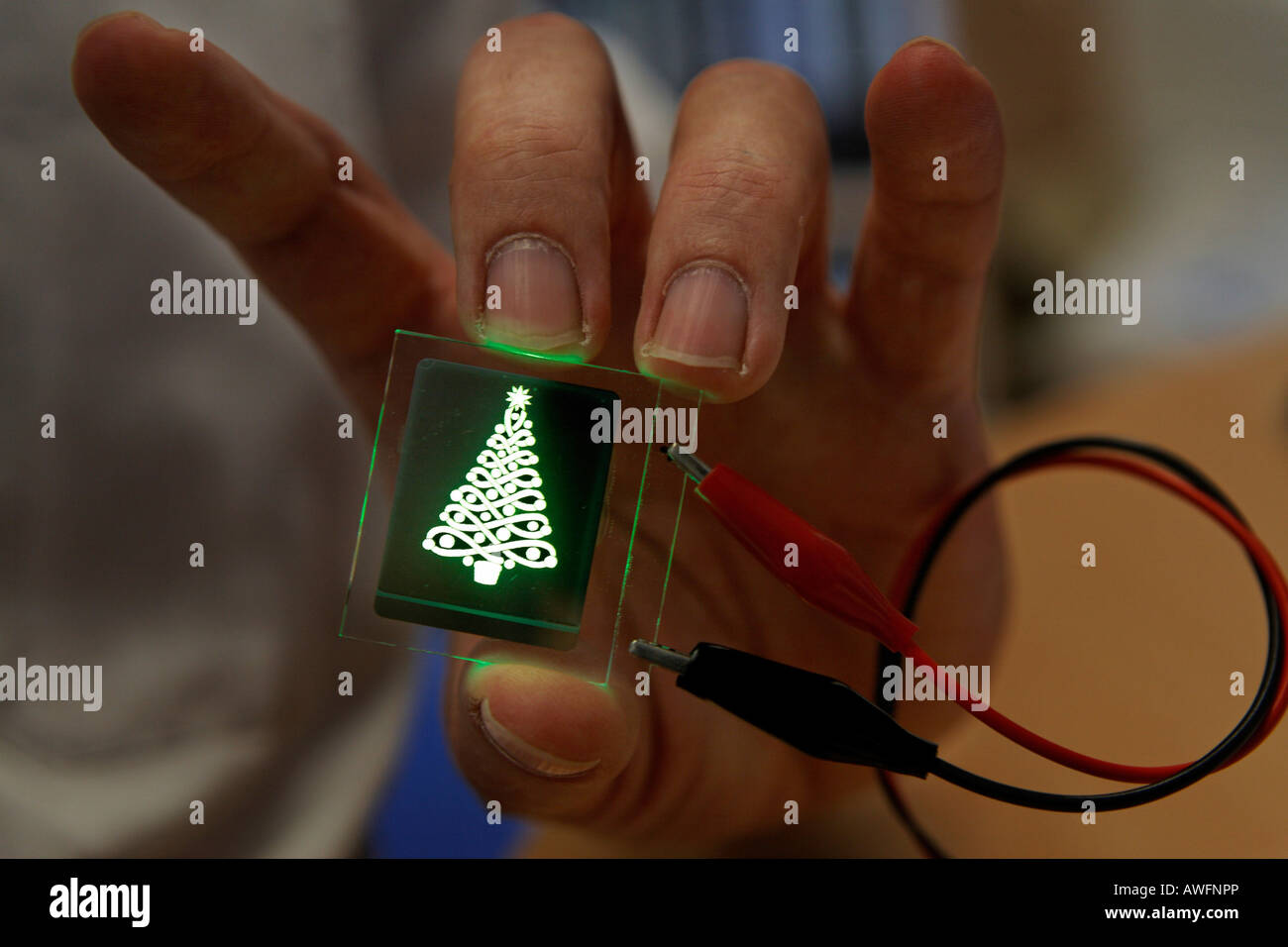 Glowing fir tree made of a new type of light-emitting diodes, Light Technology Institute, Karlsruhe university, Stock Photo