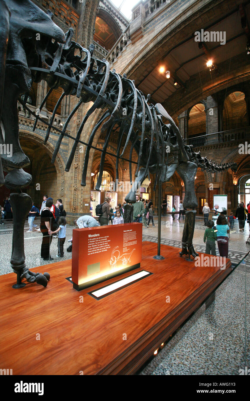 The world famous dinosaur skeleton in the entrance to the main hall of the Natural History Museum London England Britain UK EU - Stock Image