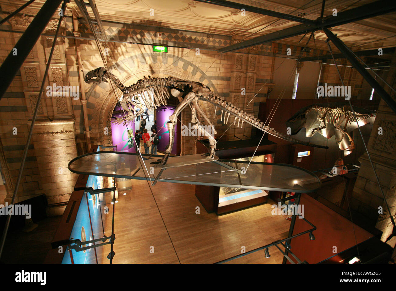 Tourists visit the popular prehistoric dinosaur exhibition at the world famous Natural History Museum London England Britain UK - Stock Image