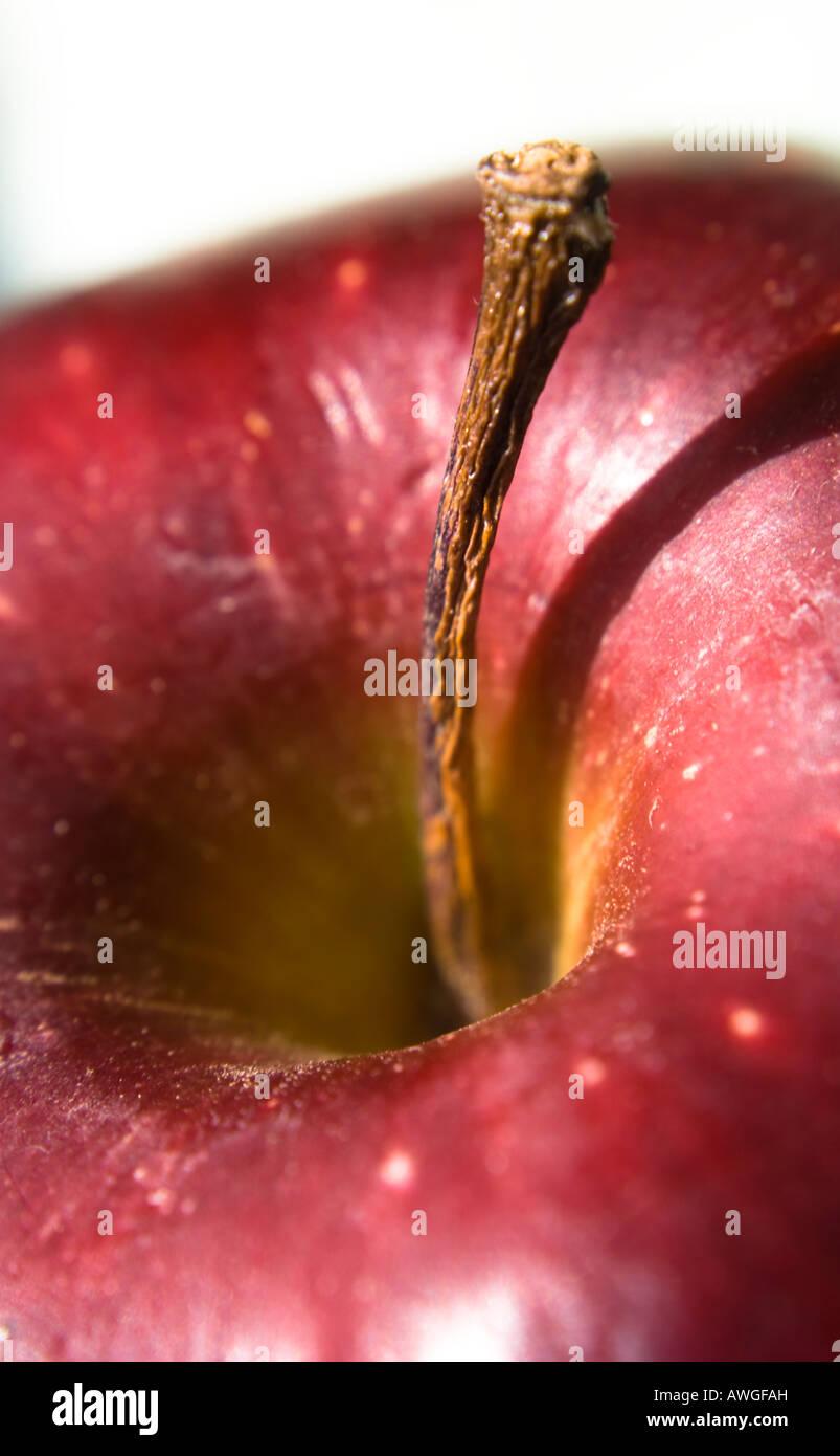 Red Apple Stem Macro - Stock Image
