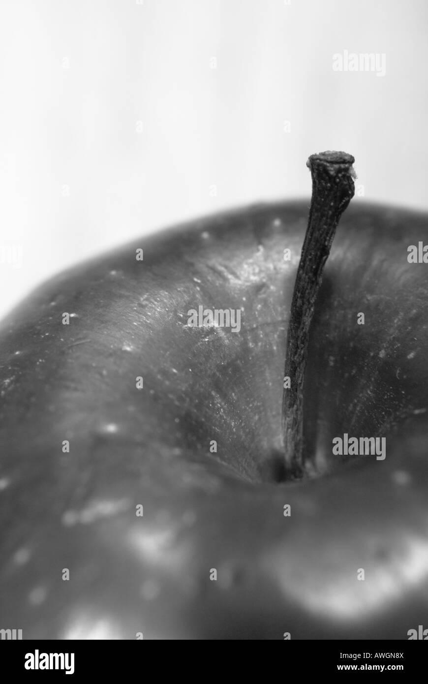 Close-up of Apple Stem, B&W - Stock Image