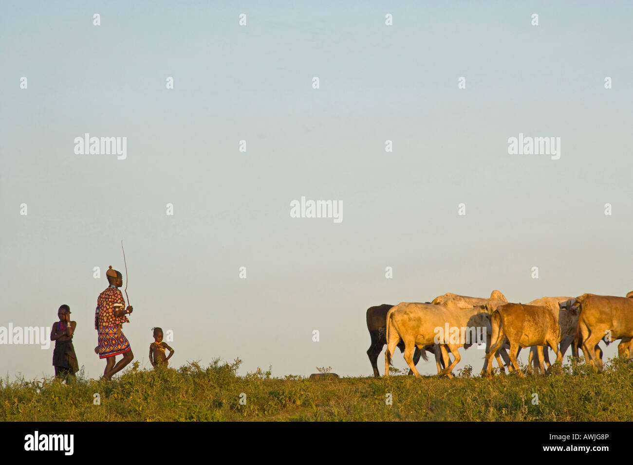 Hamer Herdsman and his Charges at Day's End, Dimeka - Stock Image