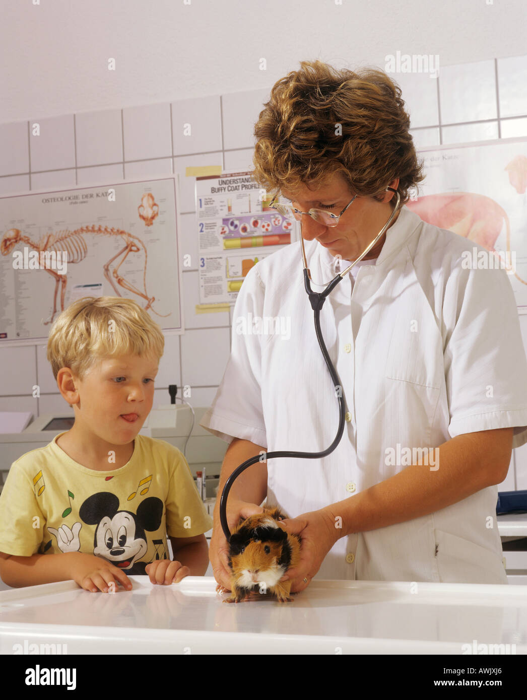 guinea pig at veterinary - Stock Image