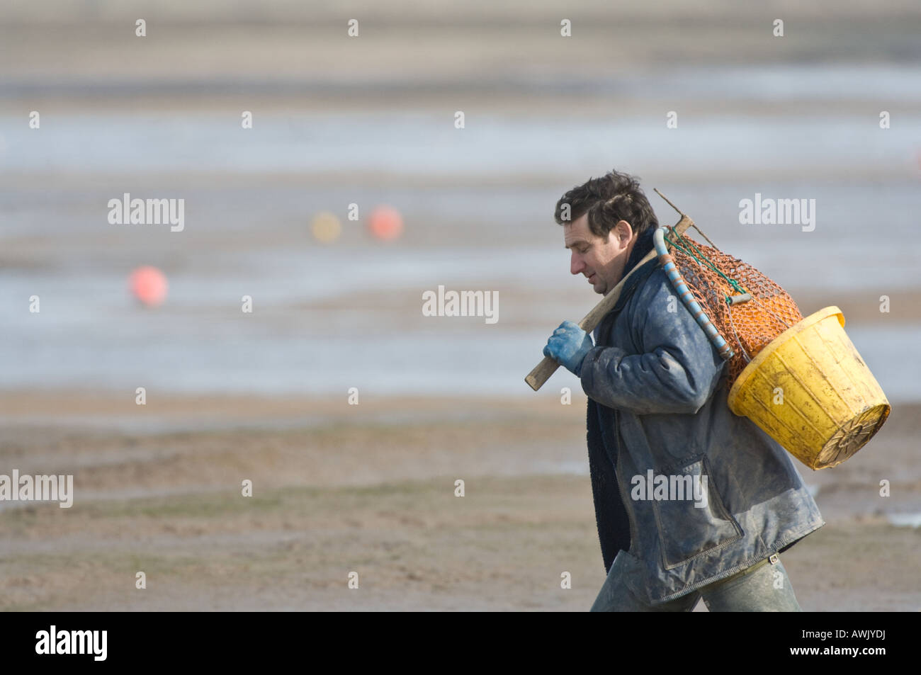 Bait digger going to work Norfolk East Anglia UK March - Stock Image