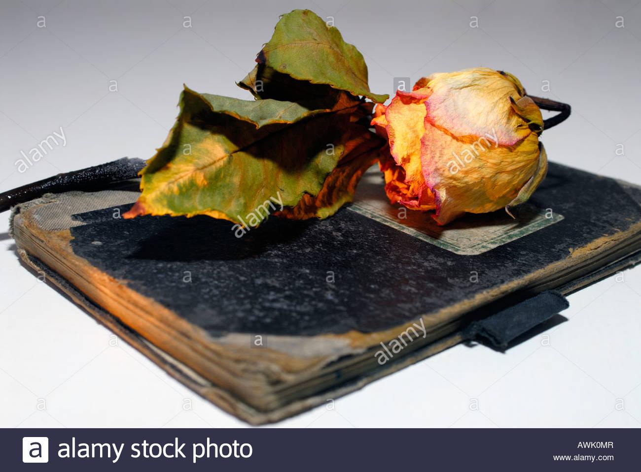 Tagebuch Tagebücher Liebe vergangene verblichene Rose Rosen vertrocknet vertrocknete altes alte Buch Bücher - Stock Image