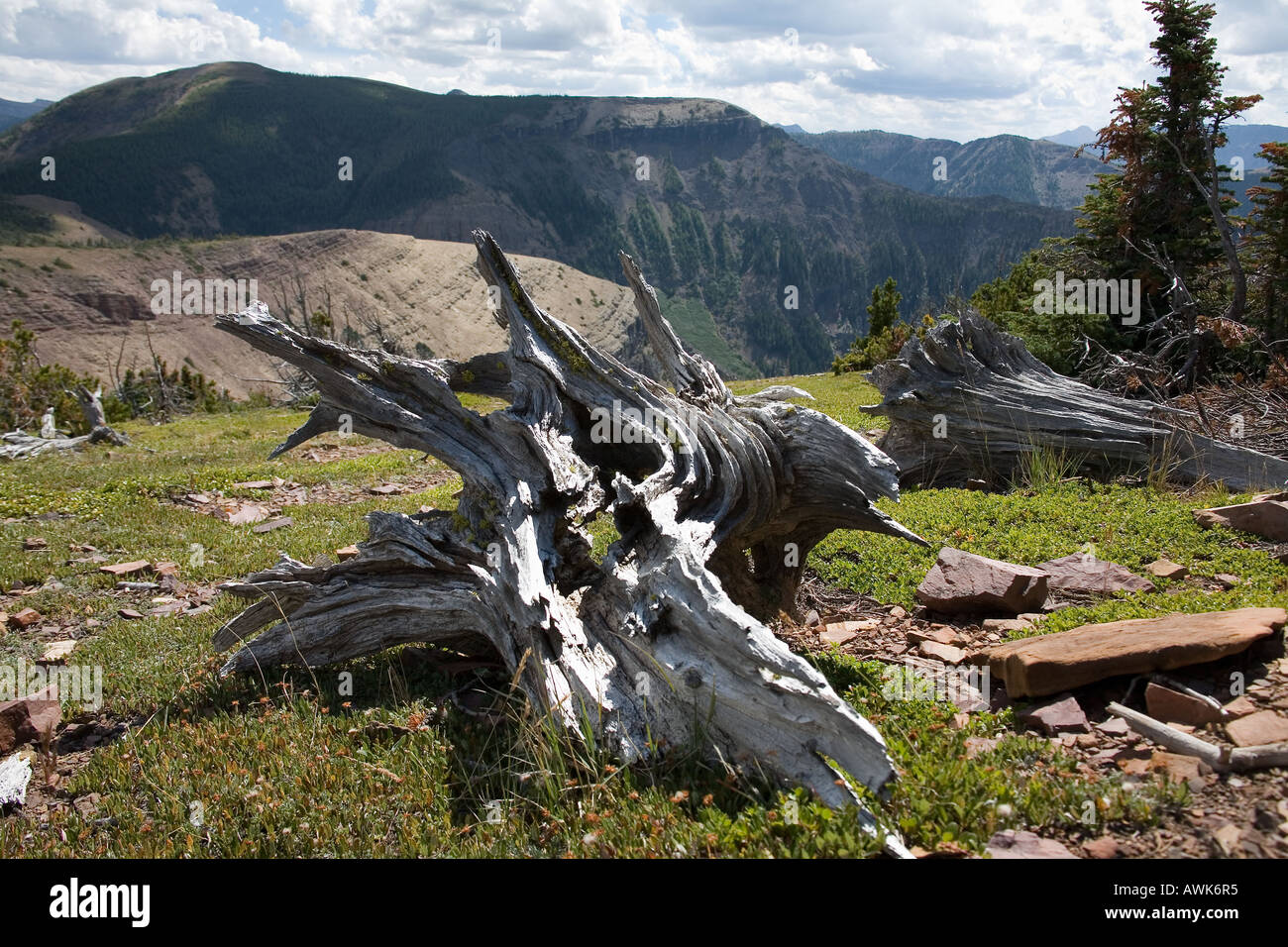 Skeletal dead trees look like weird creatures on Table Mountain Alberta Canada - Stock Image