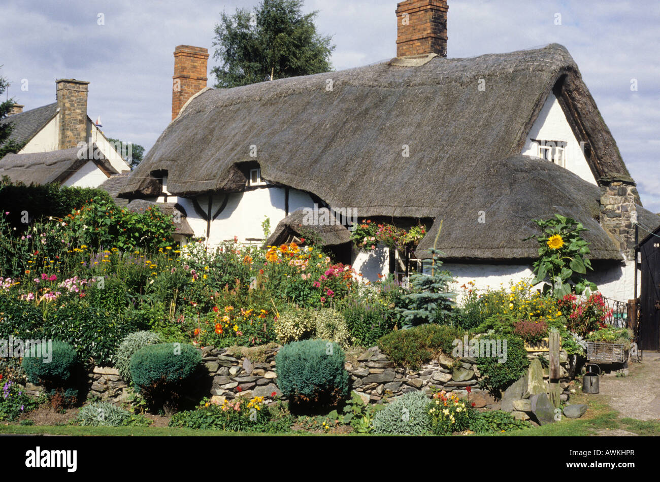 Traditional English Thatched Country Cottage Pest Cottage Woodhouse Leicestershire garden flowers plants charm charming - Stock Image
