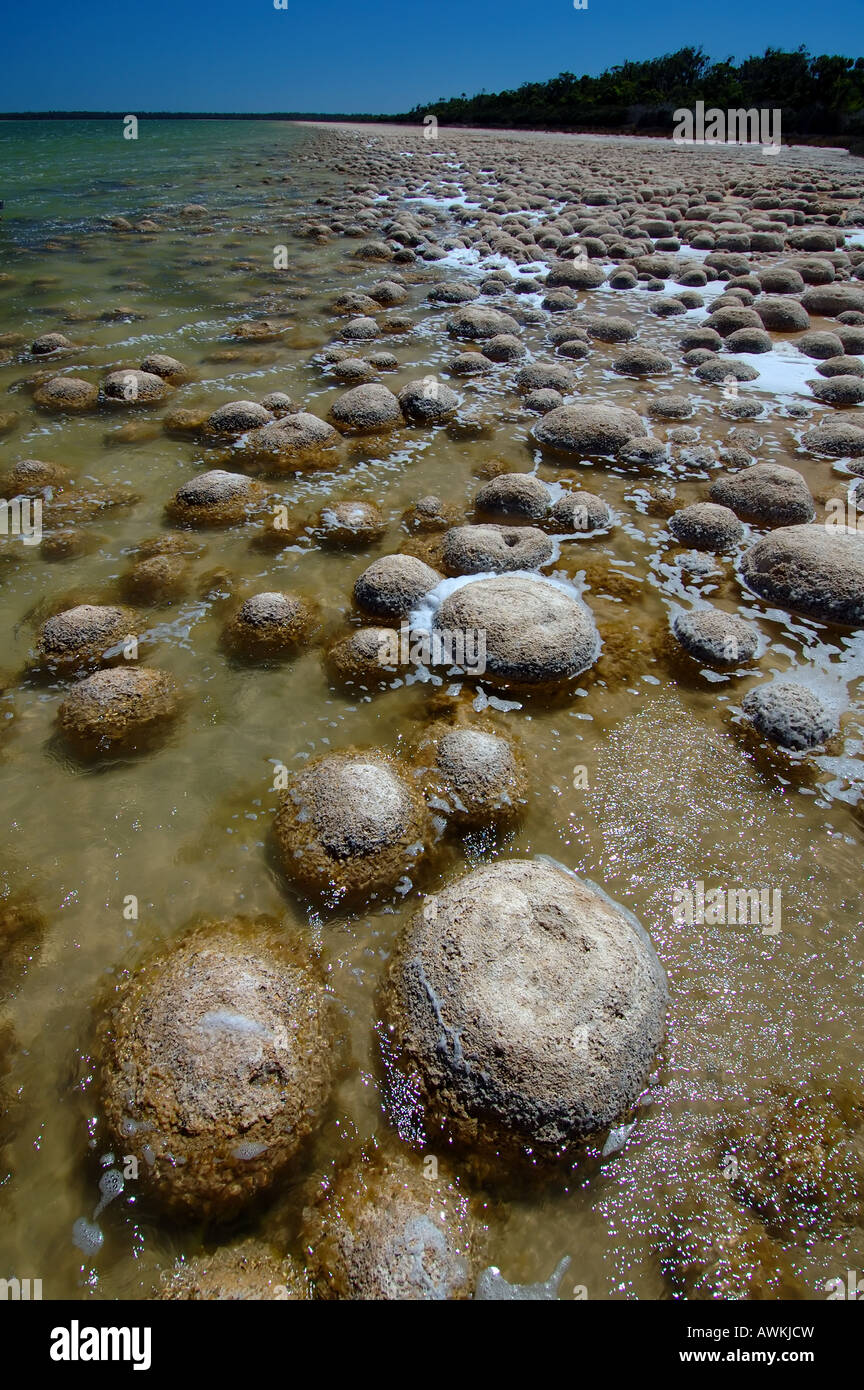 Ancient domed thrombolites on the shores of Lake Clifton Yalgorup National Park Western Australia - Stock Image