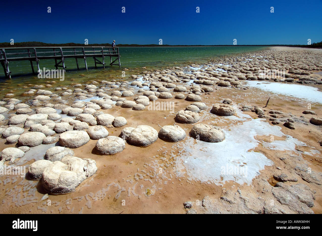 Tourist viewing ancient domed thrombolites from boardwalk on the shore of Lake Clifton, Yalgorup National Park - Stock Image