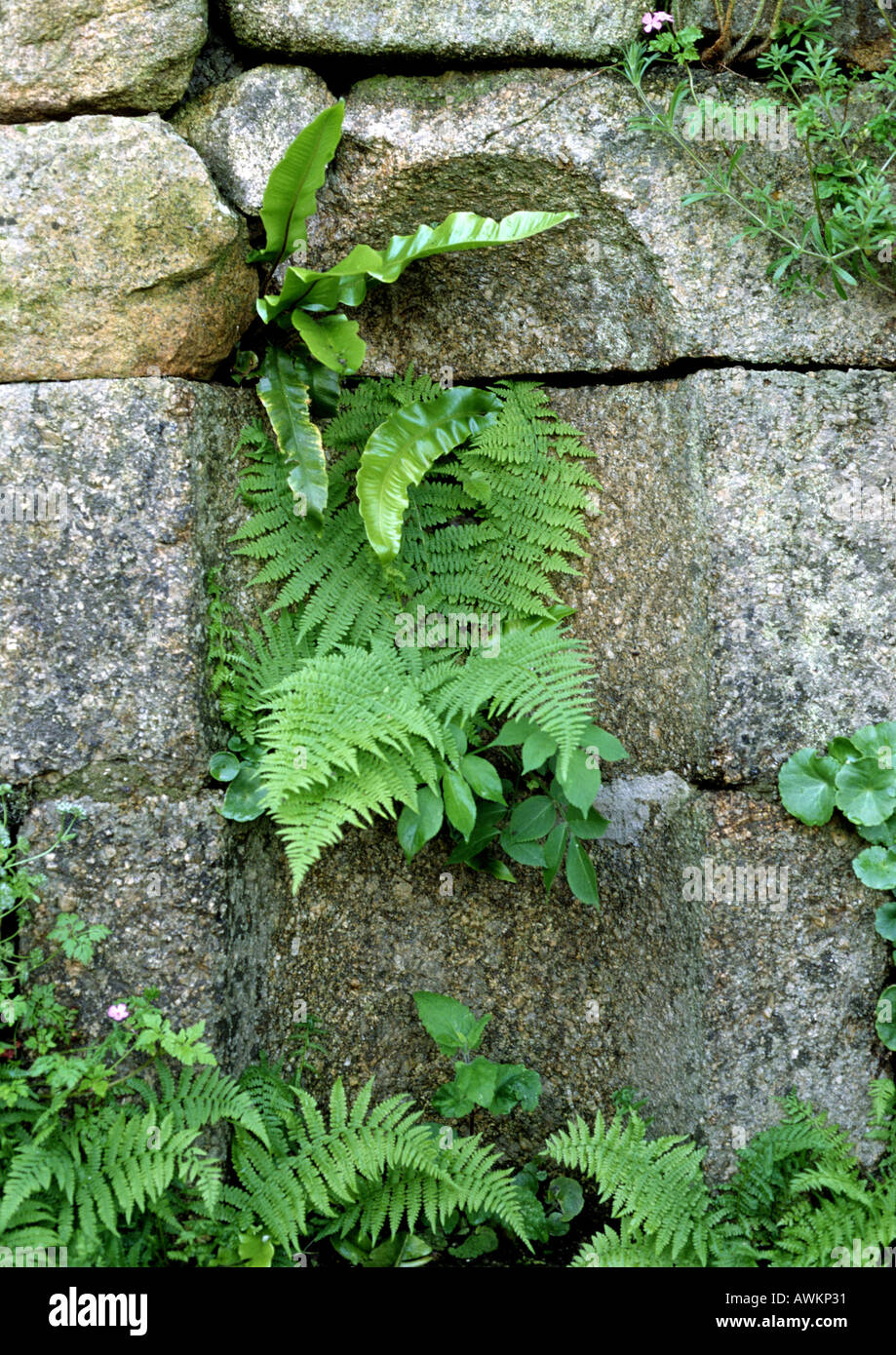 Plants Growing Through Cracks In Stone Wall Stock Photo Alamy