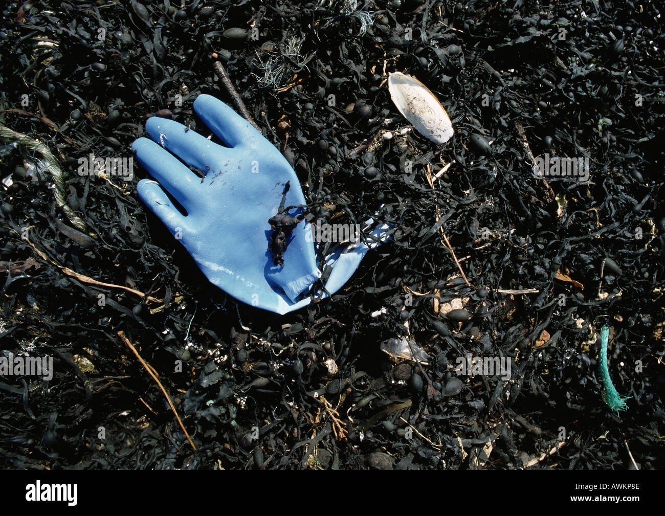 Blue rubber glove and seaweed washed up on beach - Stock Image
