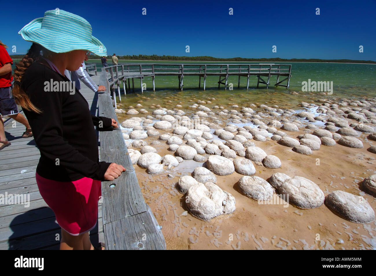 People viewing domed thrombolites from boardwalk on the edge of Lake Clifton Yalgorup National Park Western Australia - Stock Image