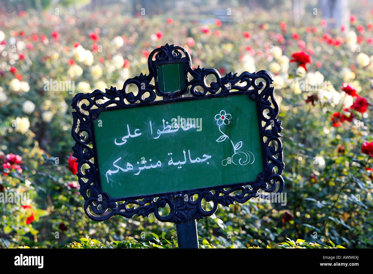 Sign with rose description in Arabic language, rose gardens of Koutoubia mosque, Marrakech, Morocco, Africa - Stock Image