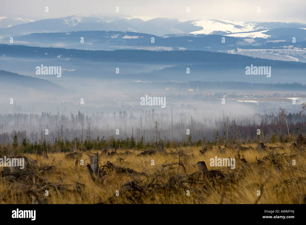 Environmental damage caused by storms and forest fires in 2005, High Tatras, Slovakia, Europe - Stock Image