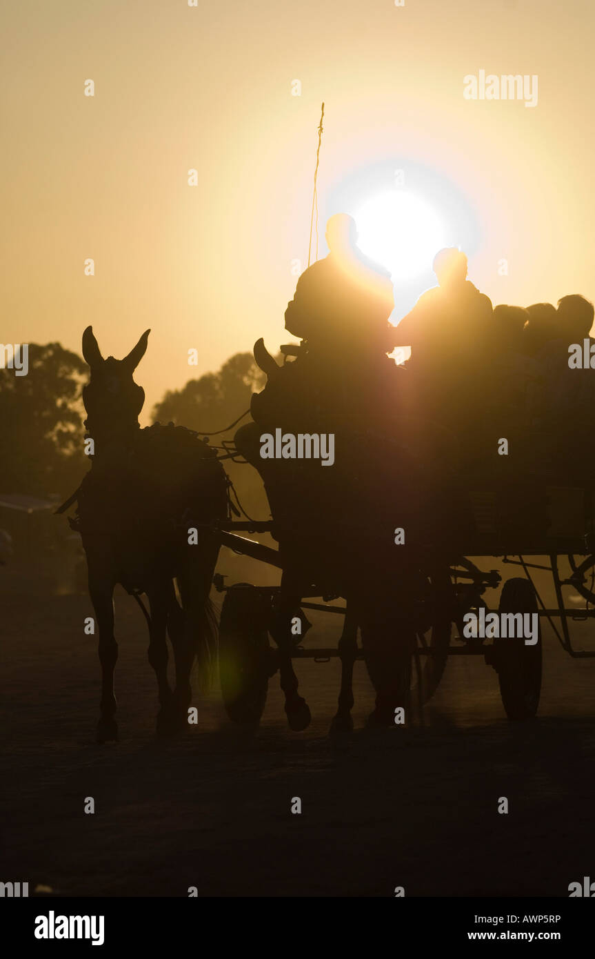 Mules pulling a wagon at sunset, Pentecost pilgrimage in El Rocio, Andalusia, Spain, Europe - Stock Image